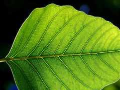 Resultado de imagen de hoja verde